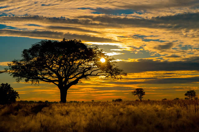 Top Reasons to visit the Okavango Delta as a solo traveller or with a group